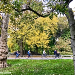 006_nyc2016_cp_bikes