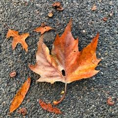 033_nyc2016_leaf